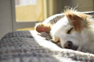 Strata Central - A little of what we learn does us good - pros and cons on pets.